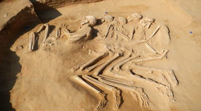 Human skeletons of 6,000 years BC were discovered in the United Arab Emirates